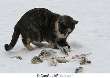 Cat Playing with Fish