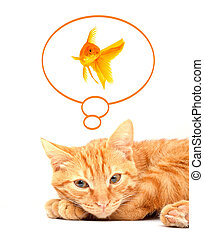 Cat playing with goldfishes isolated on white background -...