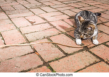 Cat playing with leather rope
