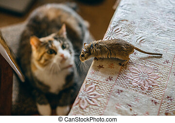 Cat playing with little gerbil mouse on the table. Natural light
