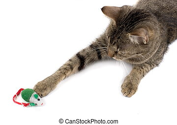 Cat Playing With Mouse - Dark tabby mixed breed cat, playing...