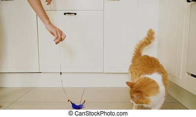 cat playing with stick - red fluffy cat playing with stick