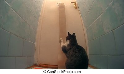 Cat playing with toilet paper and unrolling it in lavatory