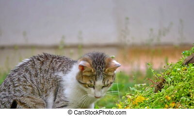 cat plays in the yard