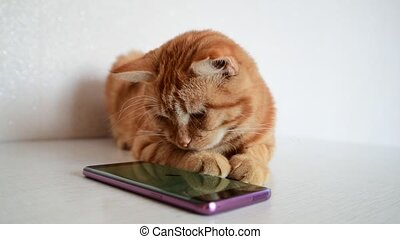 Cat plays on phone with computer game mouse - Cat plays on...