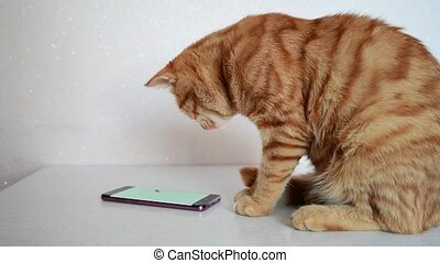 Cat plays on smartphone with computer game mouse - Cat plays...