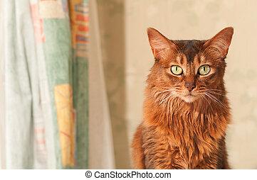 Cat portrait at home