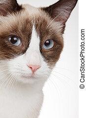 Cat portrait closeup