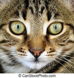 Cat portrait macro shot