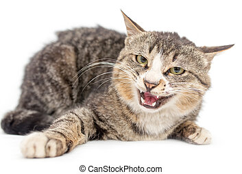 Cat portrait on a white background