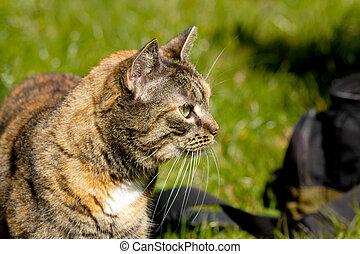 Cat portrait outdoor