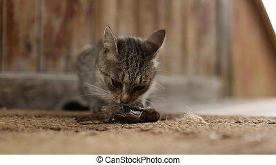 Cat predator caught a bird and eats his prey.