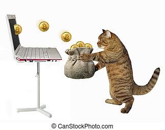 Cat puts bitcoins in a bag 2