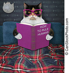 Cat reading funny book in bed 2