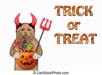 Cat reddish in red horns holds pumpkin 2