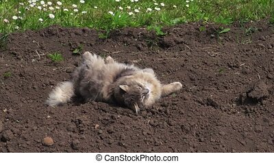 Cat relaxing on soil at outdoor