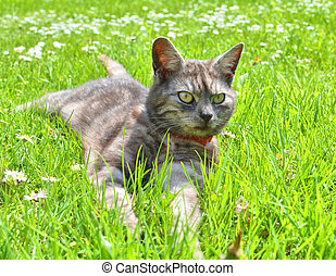 Cat relaxing on the grass
