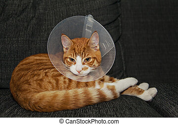 Image of a cat lying on the couch with a veterinary cone.