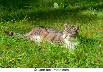 Cat resting lying on the grass
