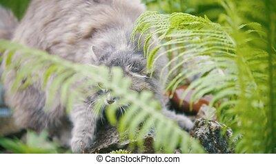 Cat running in the grass, in the garden, summer day,...