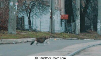 Cat runs across the road