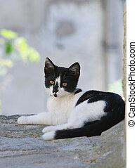 cat., séance