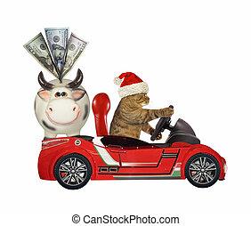 Cat Santa drives car with money box