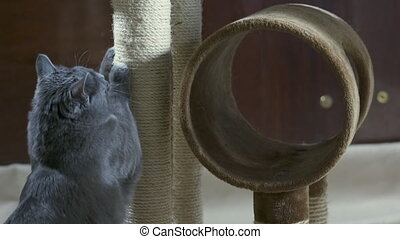 Cat sharpening his claws on vertical scratching post in slow...