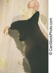 cat silhouette and curtain
