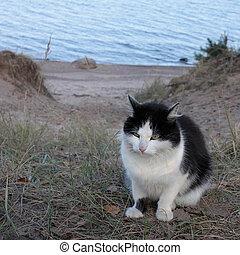 cat sit on a sandy beach