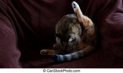 cat sits in the chair - Cat sits in the chair and watching...
