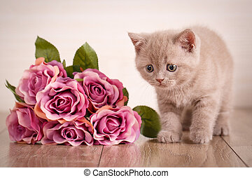 Cat sits near a bouquet of roses