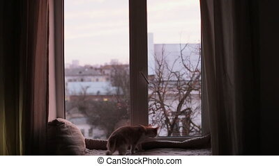 Cat sits on a windowsill and looks out the window - Lonely ...