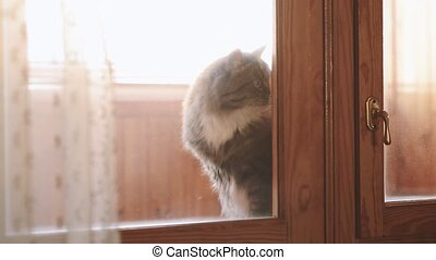 cat sits on the windowsill and paw trying to open the door