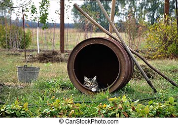 Cat sitting and looking out of old iron barrel in garden