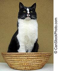 Cat sitting in a basket