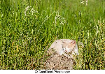 Cat sitting in a meadow