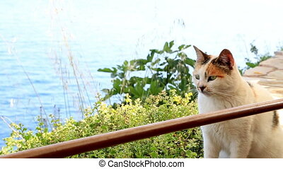 Cat sitting in front of a sea view