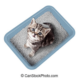 Cat sitting in litter box isolated top view