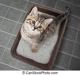 Cat sitting in litter box top view