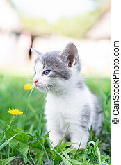 cat sitting in the grass in summer