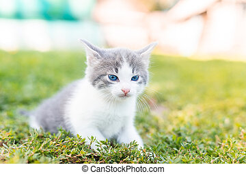 cat sitting in the grass.