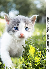 cat sitting in the grass..