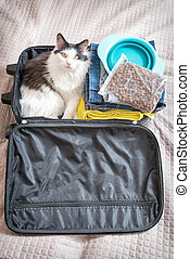 Cat sitting in the suitcase or bag and waiting for a trip....
