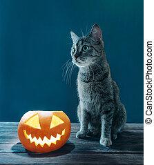 Cat sitting near Halloween jack-o-lantern glowing pumpkin.