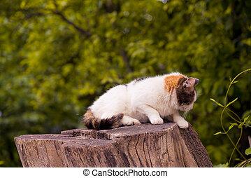 Cat sitting on a stump