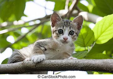 Cat sitting on a tree
