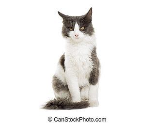 cat sitting on a white background