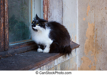 Cat sitting on an old window