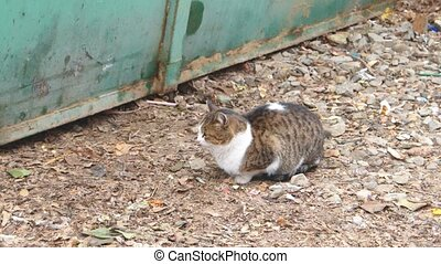 Cat sitting on gravel near metal fence - Cat sitting on...